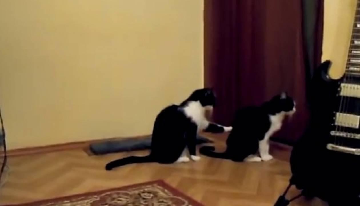 Βίντεο που σαρώνει: Αρνήθηκε τη συγνώμη της και τότε... δείτε τι έκανε