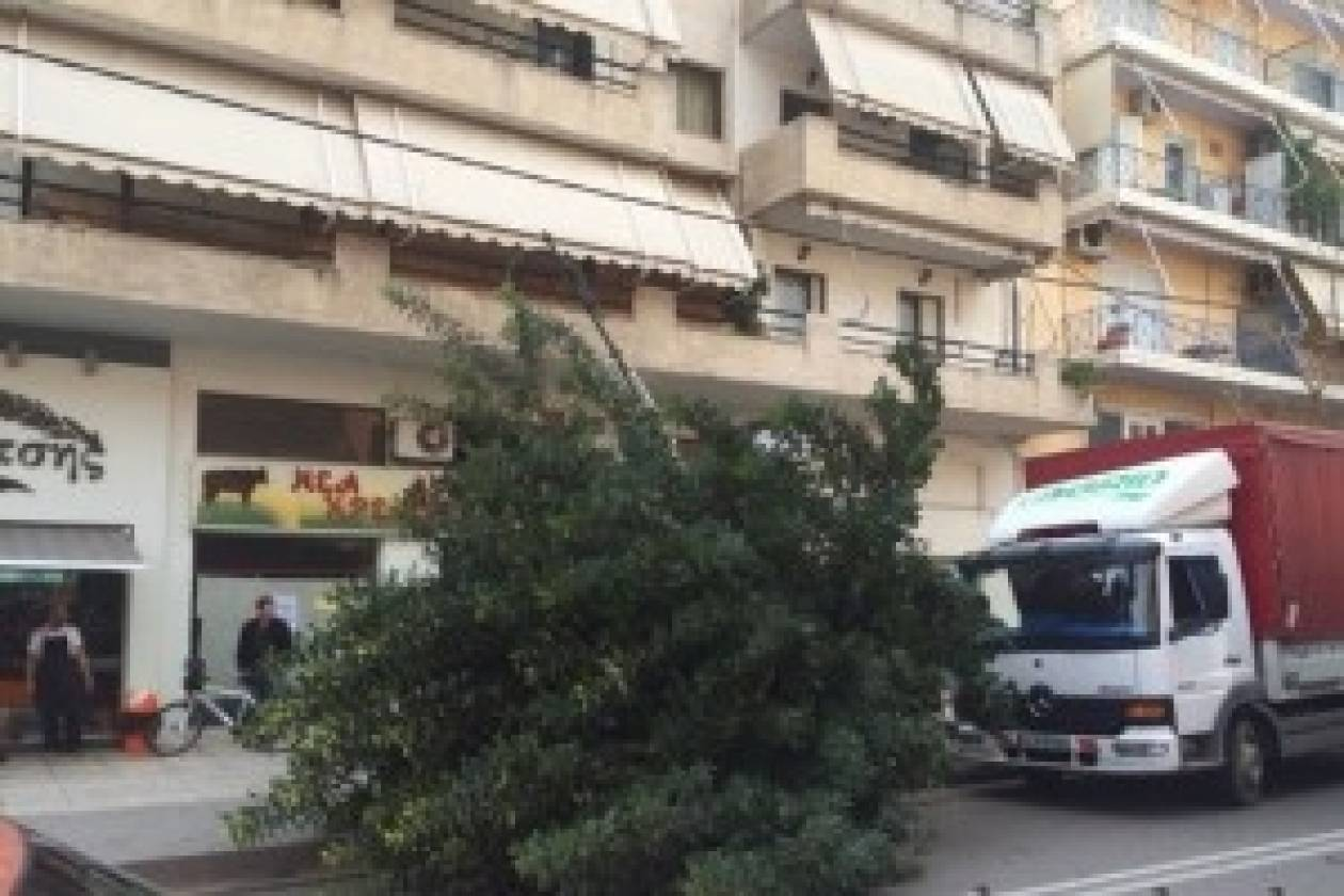 Φορτηγό παρέσυρε δέντρο! (pic)