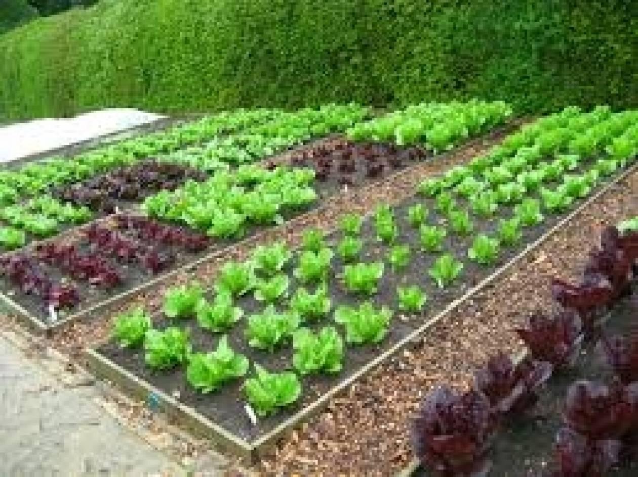 Αιτήσεις για τον δημοτικό λαχανόκηπο στη Θεσσαλονίκη