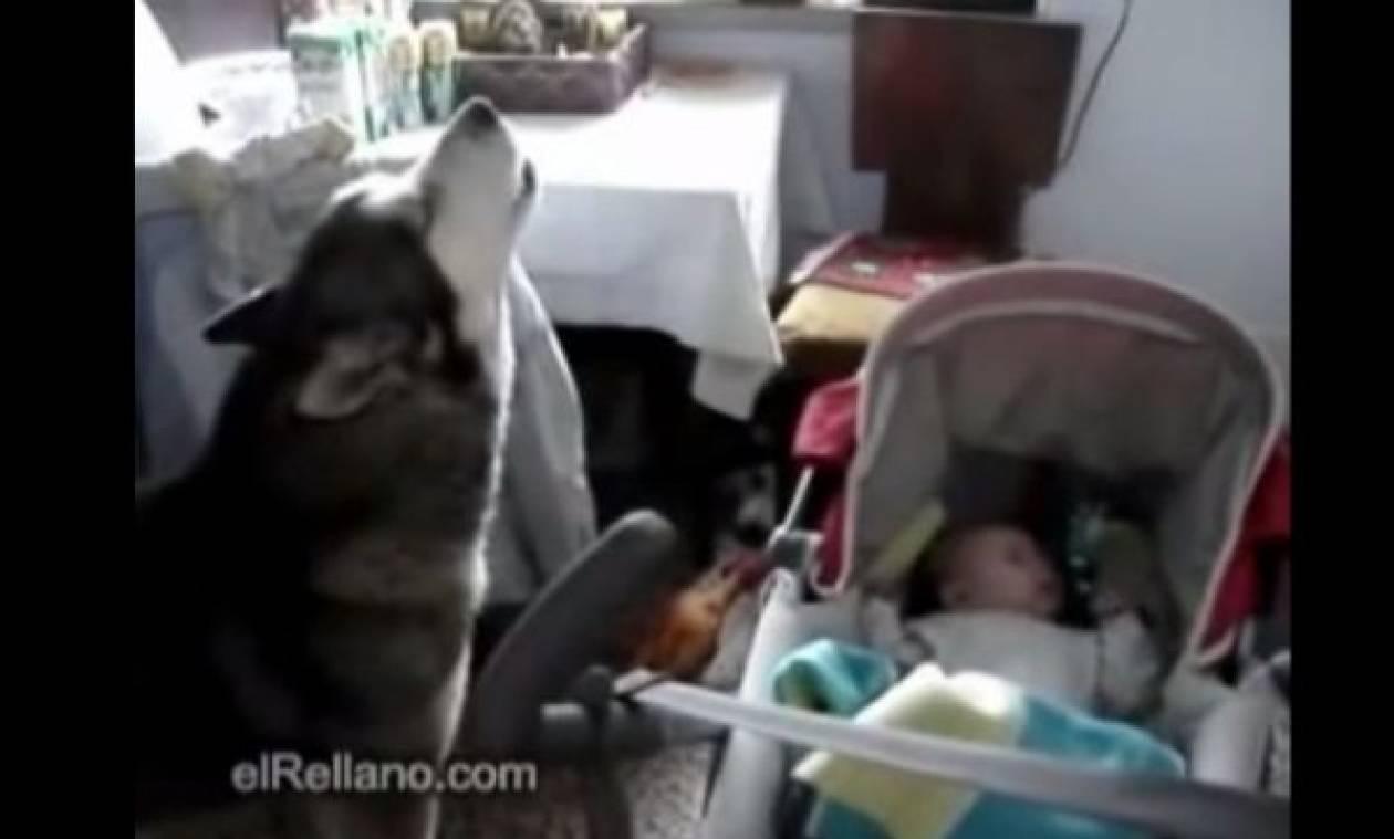 Το χάσκι που τραγουδάει στο μωρό για να σταματήσει να κλαίει!