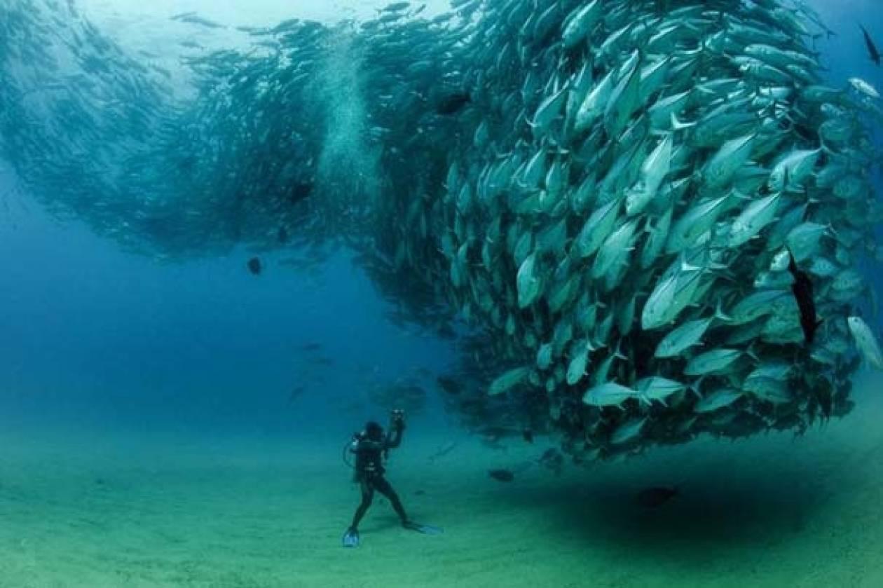 Δείτε έναν τυφώνα από ψάρια (pics)
