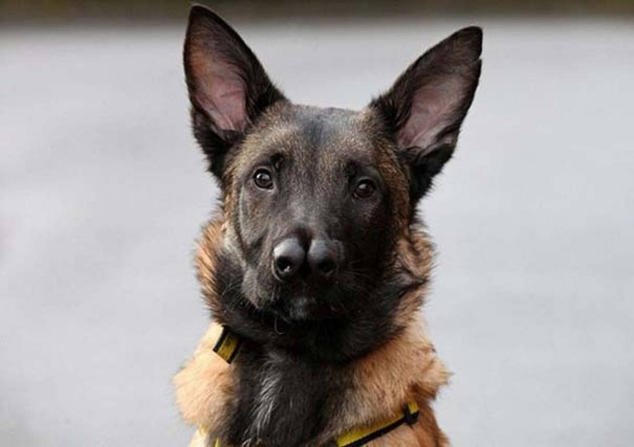 Ο σκύλος με τις δυο μύτες που δεν θέλει κανένας να υιοθετήσει (pics)