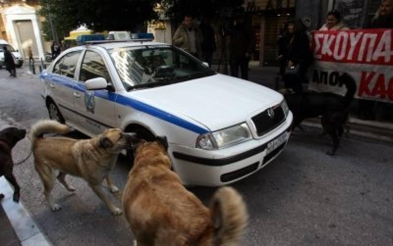 Αδέσποτοι σκύλοι εναντίον... περιπολικού! (pics)