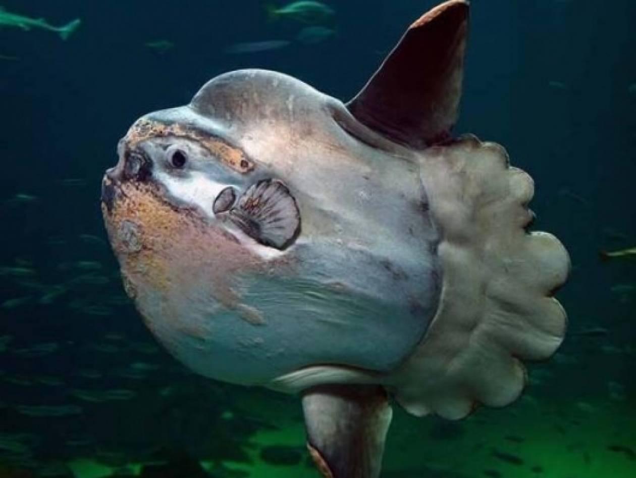Το βαρύτερο ψάρι στον κόσμο! (pics)