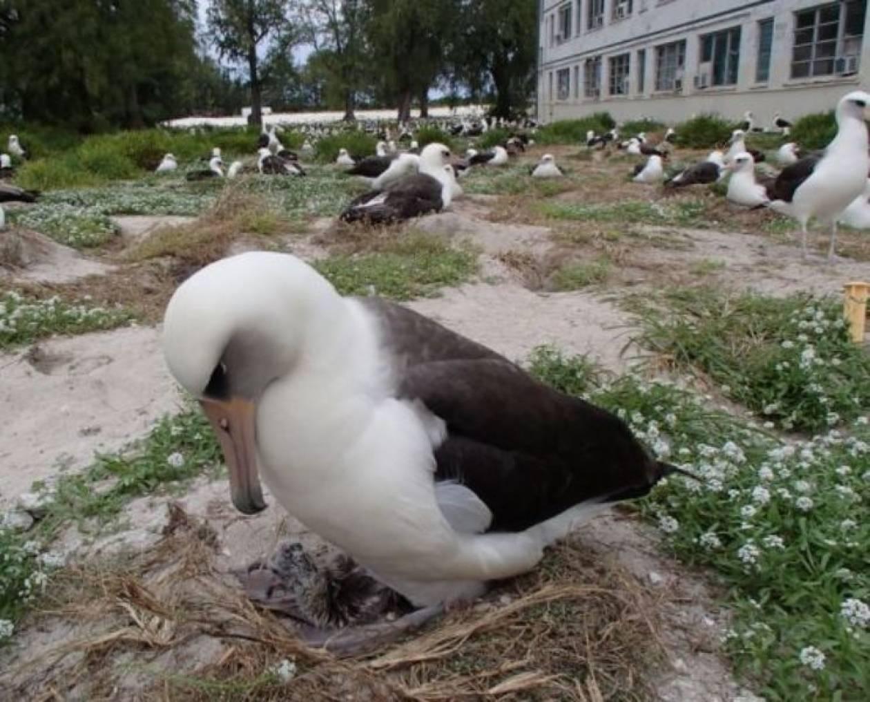 Πτηνό 63 ετών συνεχίζει να γεννά! (pics)
