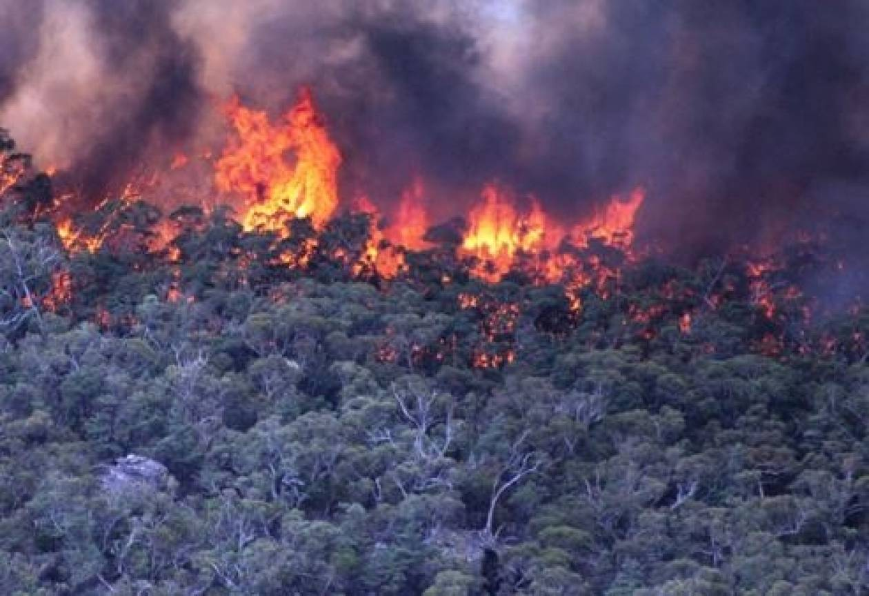 Φωτιά στην περιοχή Βαντές στα Χανιά