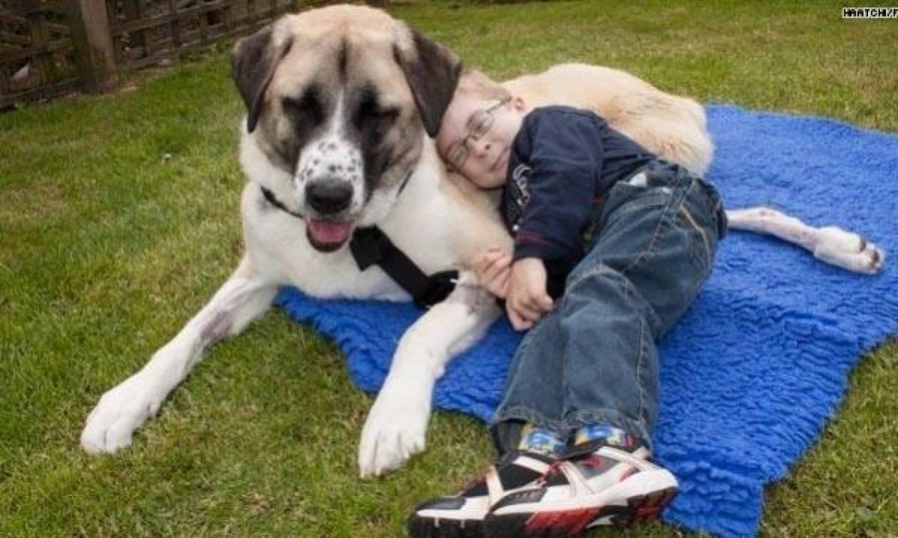 Οουεν και Χάτσι: Μια φιλία ανάμεσα σ' ένα αγόρι και έναν σκύλο