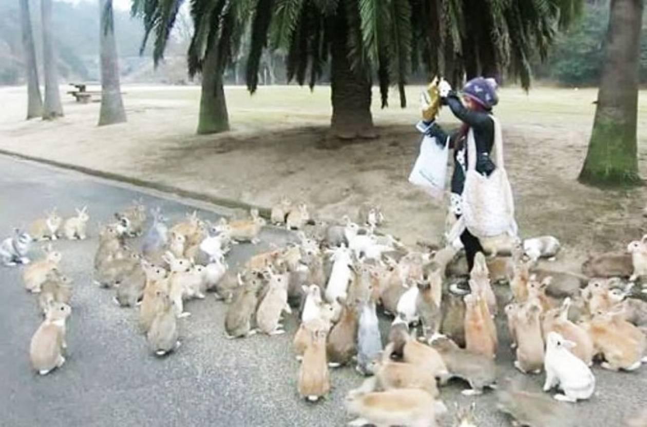 Δείτε γιατί αυτό το νησί είναι γεμάτο κουνέλια