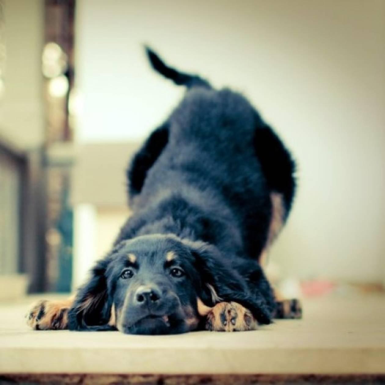 Πώς αντιμετωπίζουμε τον υποθυρεοειδισμό στο σκύλο;