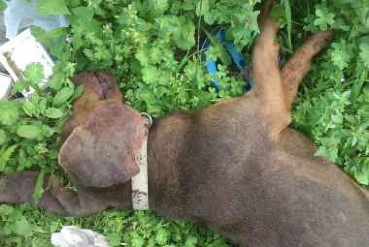 Φρίκη στην Πάτρα: Θανάτωσαν σκυλιά για... εκπαίδευση