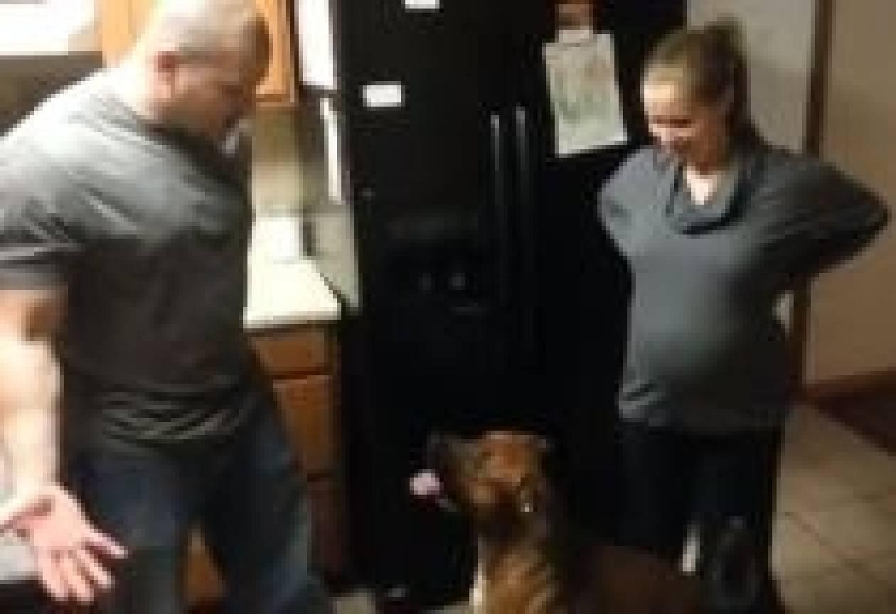 Βίντεο: Δείτε πώς ένας σκύλος προστατεύει μια έγκυο γυναίκα!