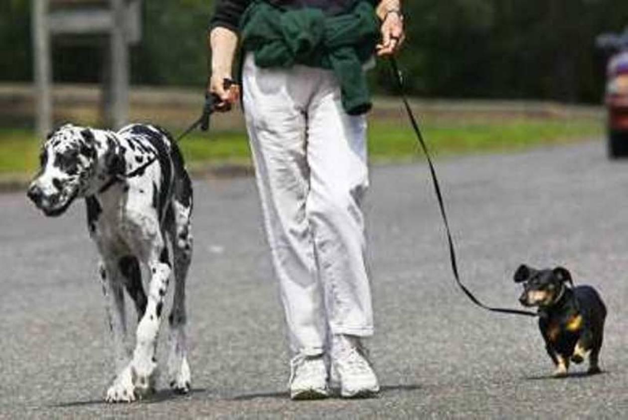 Έβγαλαν βόλτα το σκύλο και βρήκαν θησαυρό