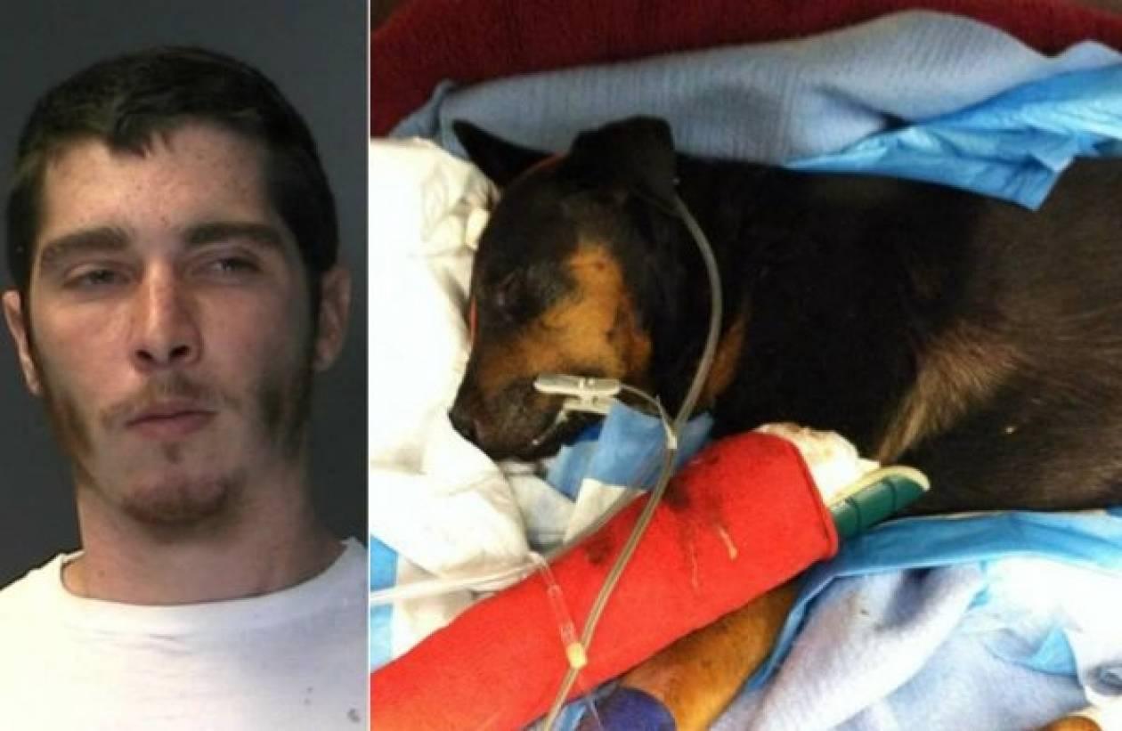 Φρικτό έγκλημα: Βίασε σκύλο και μετά τον χτύπησε μέχρι θανάτου