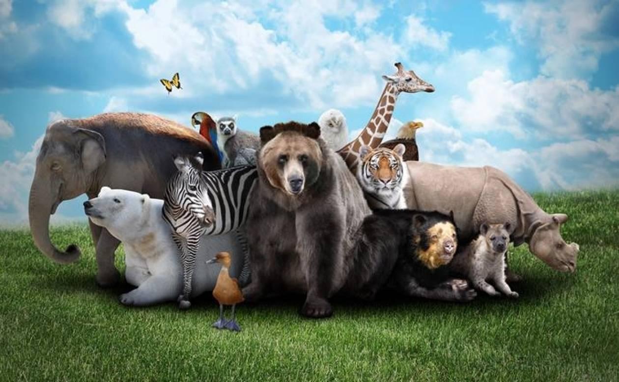 Δε φαντάζεστε ποιο είναι το πιο επικίνδυνο ζώο του πλανήτη!