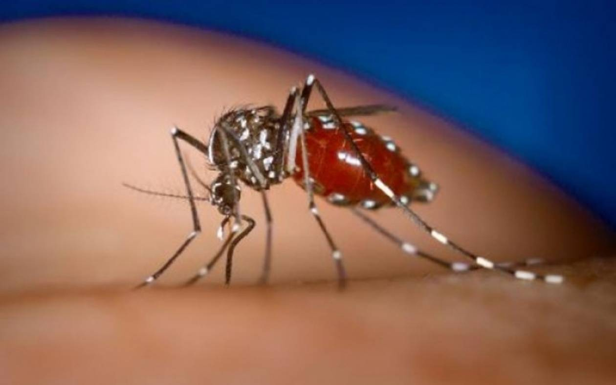 ΚΕΕΛΠΝΟ: 85χρονος το πρώτο κρούσμα από τον ιό του Δυτικού Νείλου