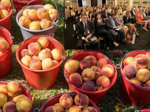 Oι ροδακινοπαραγωγοί επιμένουν και θέλουν να κρατηθούν στη ρωσική αγορά…