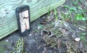 Πώς να μαζέψεις δεκάδες βατράχια στο ίδιο σημείο (Video)