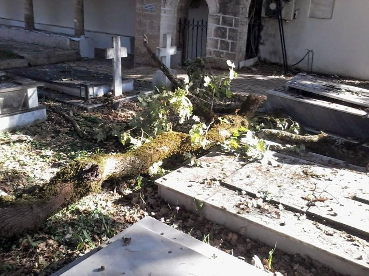 Θεσπρωτία: Καταστράφηκαν μνήματα από την πτώση πλατάνου στο Φοινίκι Φιλιατών