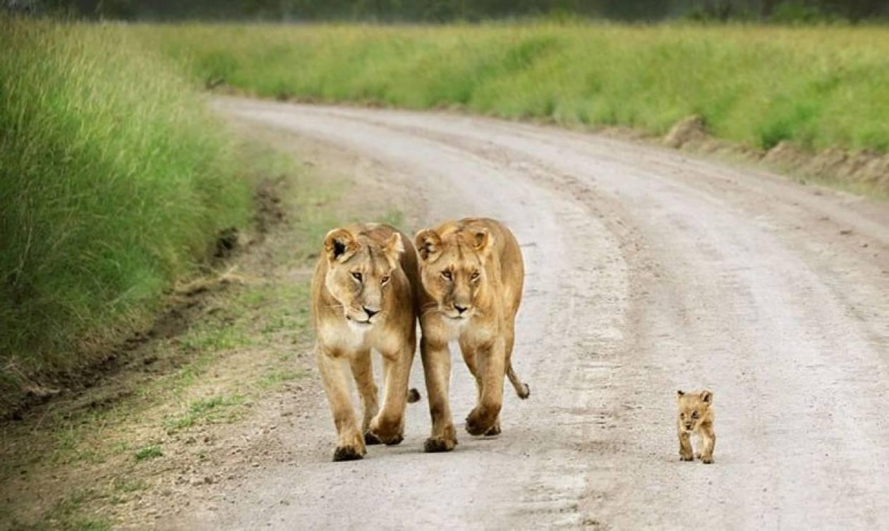 Οικογενειακά πορτραίτα απλό ο ζωικό βασίλειο
