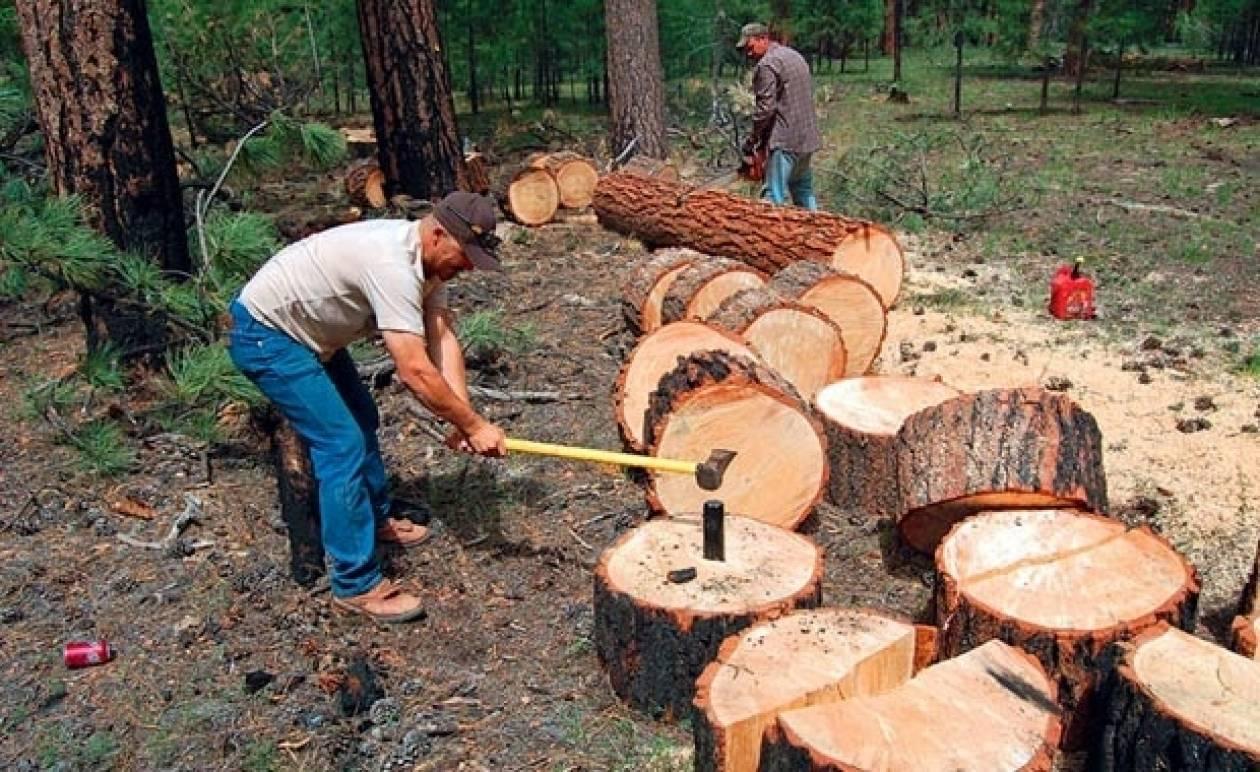 Αχαΐα: Εντοπίστηκαν 50 τόνοι παράνομης ξυλείας