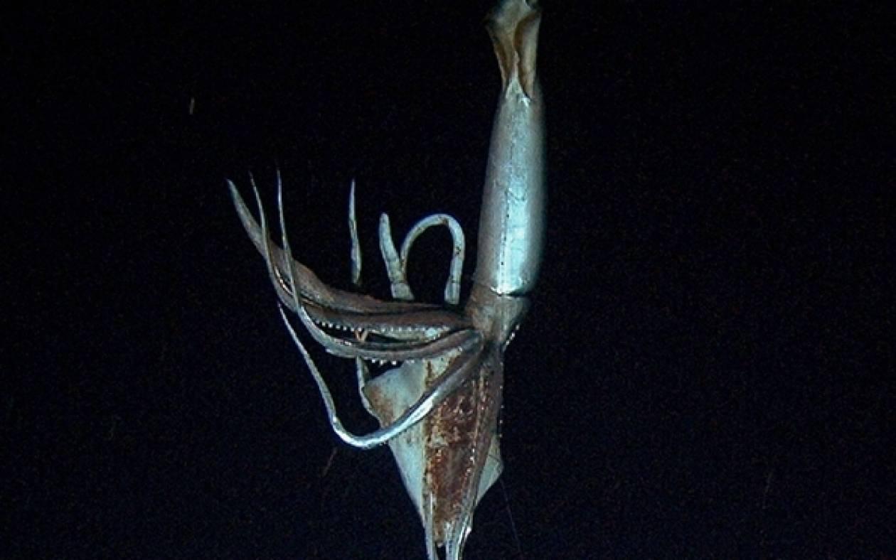 Γιγαντιαίο καλαμάρι επιτίθεται σε υποβρύχιο της Greenpeace (vid)
