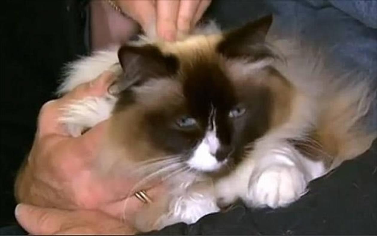 Γάτα αύξησε την τιμή σπιτιού κατά… 100 χιλιάδες ευρώ