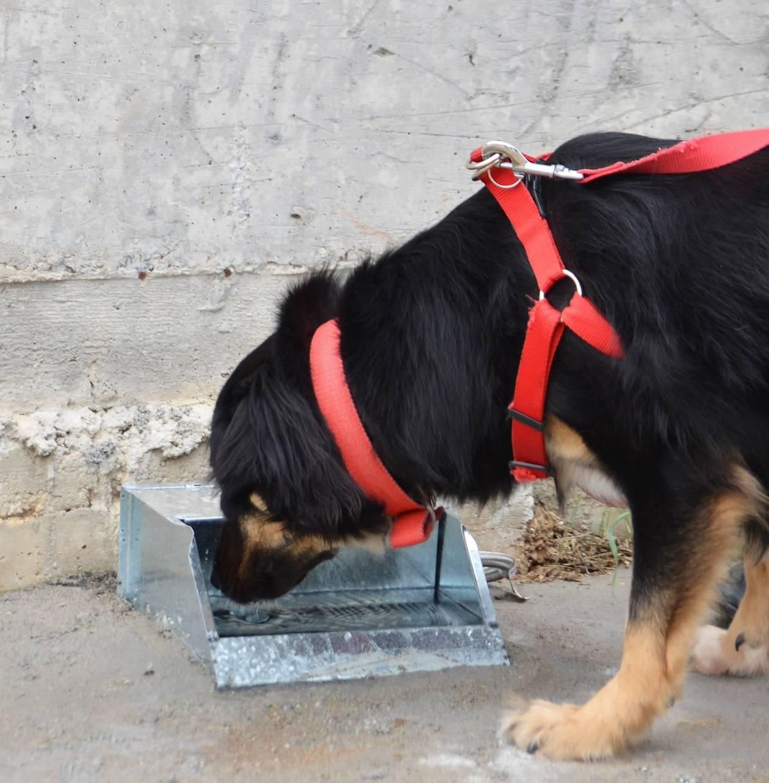 Θεσσαλονίκη: Ο Δήμος Νεάπολης-Συκεών αγόρασε ποτίστρες για τα αδέσποτα