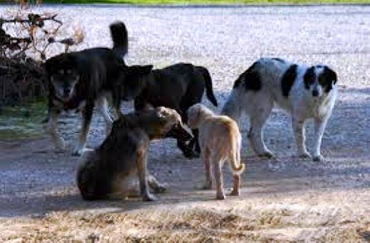 Καρδίτσα: Συνελήφθη 47χρονος για κακοποίηση 2 σκύλων