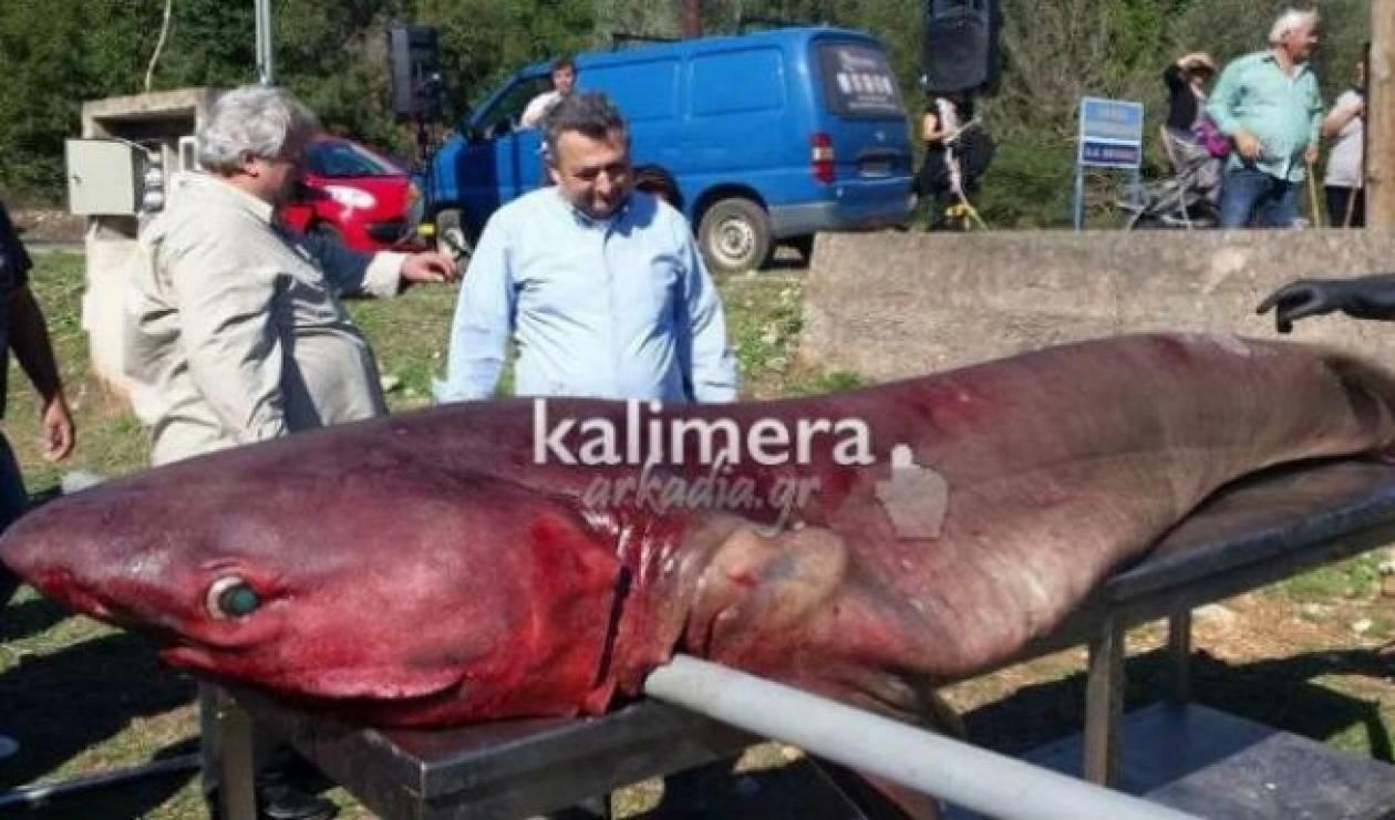 Καρχαρίας «εμφανίστηκε» στη λίμνη Λάδωνα (vid)