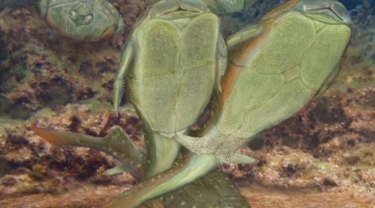 Το σεξ ξεκίνησε πριν 385 εκατομμύρια χρόνια μεταξύ... ψαριών!