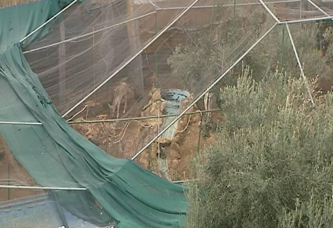 Χανιά: Βρέθηκαν ελάφια και φασιανοί σε παράνομο εκτροφείο