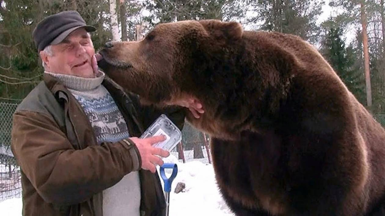 Ο άνθρωπος που είναι... κολλητός με έξι τεράστιες καφέ αρκούδες (Vid)