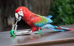 Ο παπαγάλος που... σκοτώνει