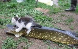 Αρπακτικό ψάρι πέταξε γατάκι μέσα στη λίμνη!
