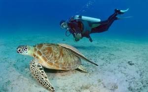Παλαουάν: Το πιο εξωτικό νησί στον κόσμο!