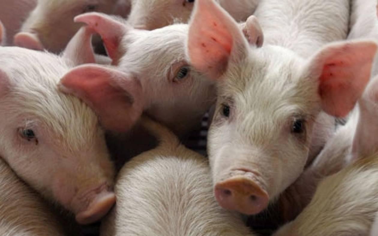Αθωώθηκαν 92 αγροτοκτηνοτρόφοι στα Γρεβενά