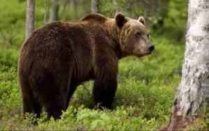 Εμφανίστηκε αρκούδα στο Άργος Ορεστικό