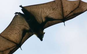 ΗΠΑ: Νυχτερίδες κατέλαβαν το δικαστικό μέγαρο