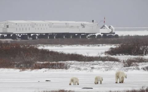 Παρατηρώντας πολικές αρκούδες στον Καναδά!