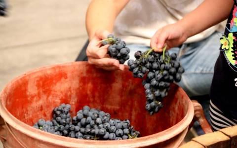 Κρήτη: Θέλουν να «αναστήσουν» τον μαλβαζία οίνο