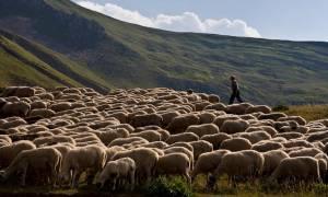 Μειώνει τα δημοτικά τέλη στους κτηνοτρόφους ο Δήμος Πάργας
