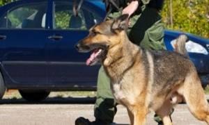 Θεσσαλονίκη: Ο σκύλος… μύρισε την κάνναβη