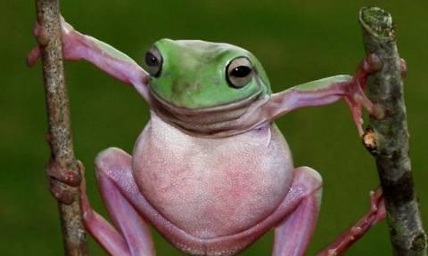 Ξεκαρδιστικό: Ο dr. Παντελής Βιολογίδης, ο βάτραχος και το κοινό