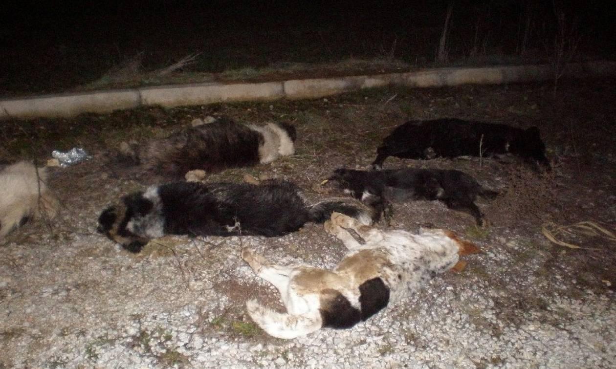 Μαζική δηλητηρίαση σκύλων με υδροκυάνιο στη Δράμα