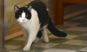 Μία γάτα-πρόσφυγας συγκινεί όλο τον πλανήτη! (video)