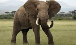 Γερμανία: Ελέφαντας δραπέτευσε από τσίρκο και σκότωσε 65χρονο (photos)