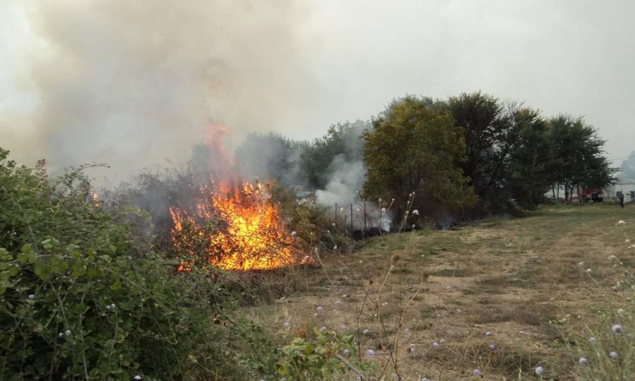 Έσβησε η φωτιά στην Πάρνηθα (photo)