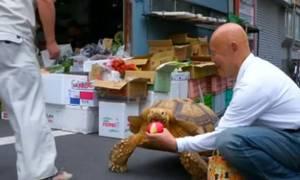 Τσάρκα με τη… χελώνα του: Το κατοικίδιο που έγινε σταρ του Διαδικτύου (video & pics)