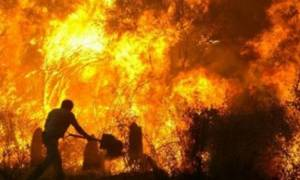 Άρειος Πάγος: Επικύρωσε τις καταδίκες του νομάρχη Ηλείας και του δήμαρχου Ζαχάρως για τις πυρκαγιές