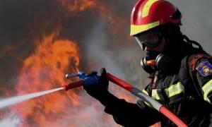 Πυρκαγιές: Υπό έλεγχο η φωτιά στη Βοϊδοκοιλιά Μεσσηνίας